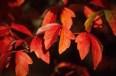 fall foliage colors