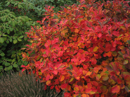 fall color sitting area