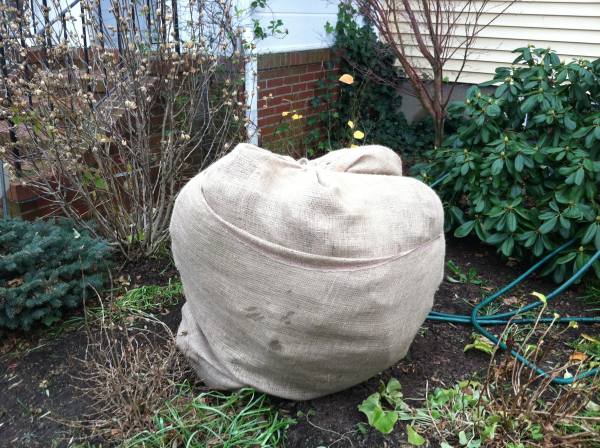 winter plant covers