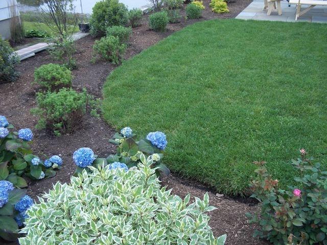 new_plantings,_blustone_patio_in_background.jpg