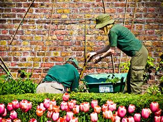 finding a garden designer