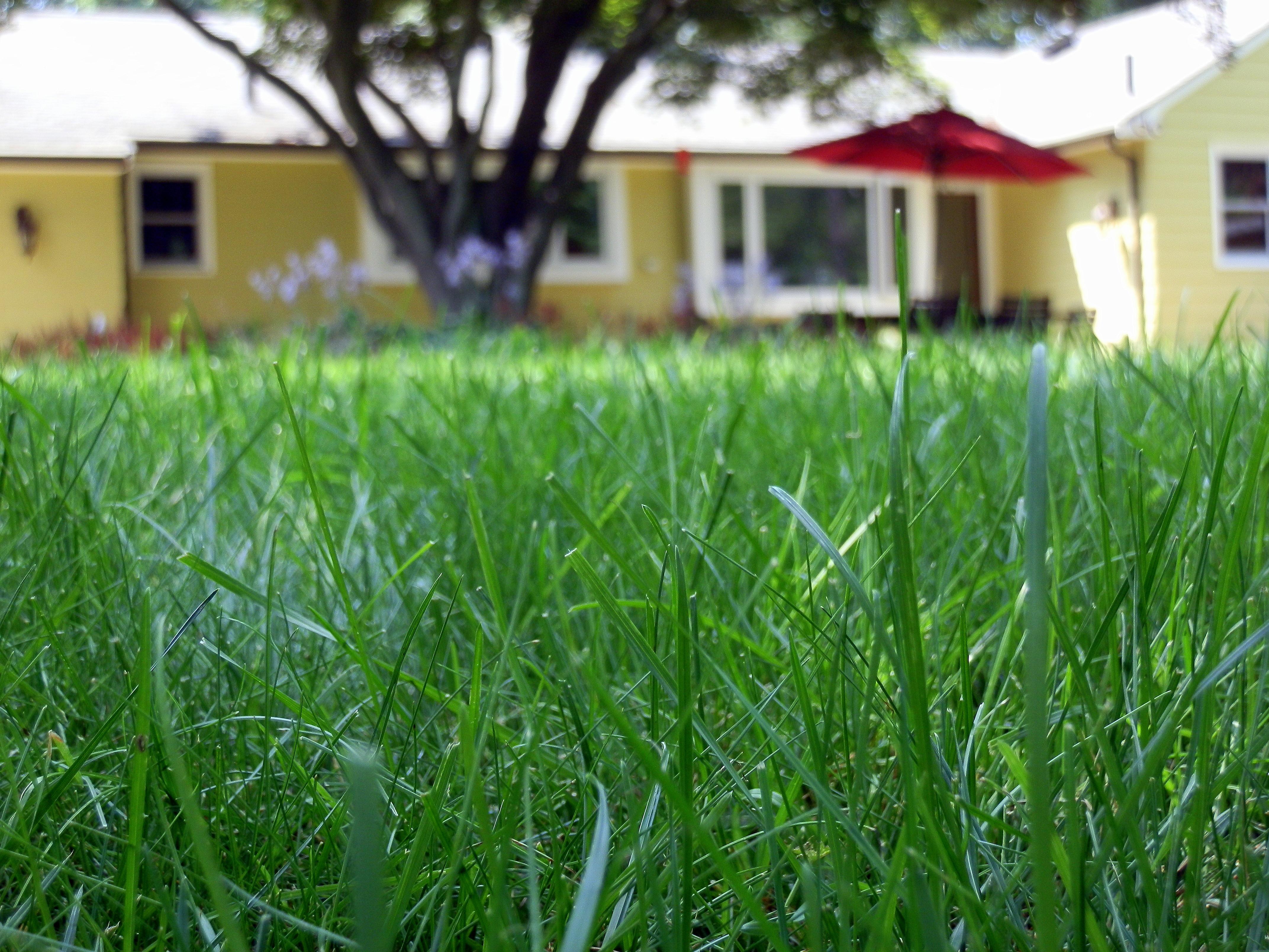 advantages of organic lawns