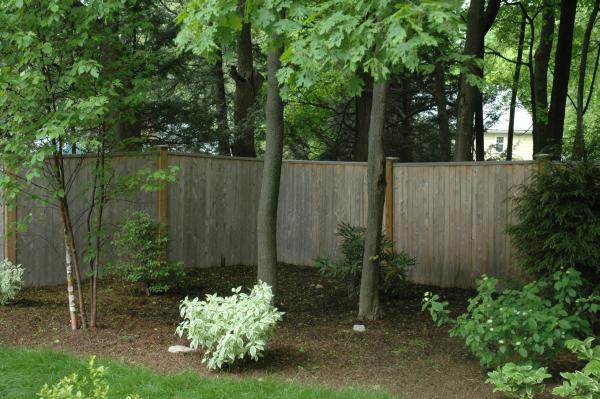 back yard woodland garden