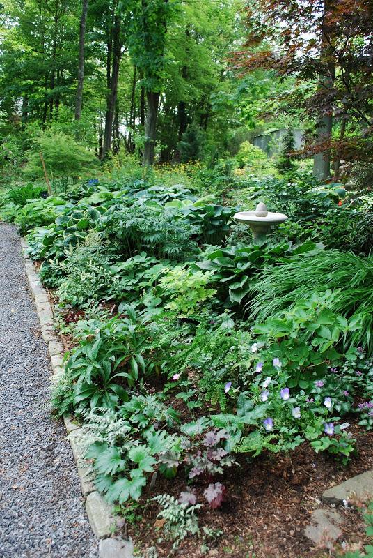 shade perennial garden lexington ma