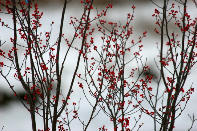 prune small trees during winter