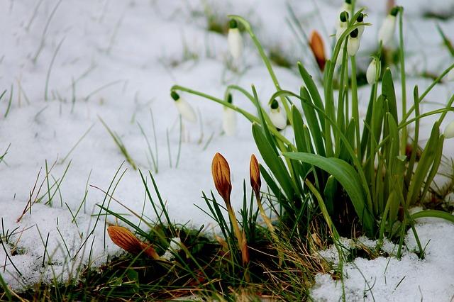 winter garden care