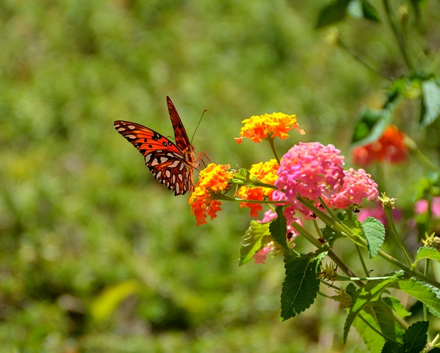 Wild flowers loved by pollinators