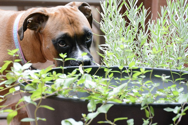 dogs and gardens
