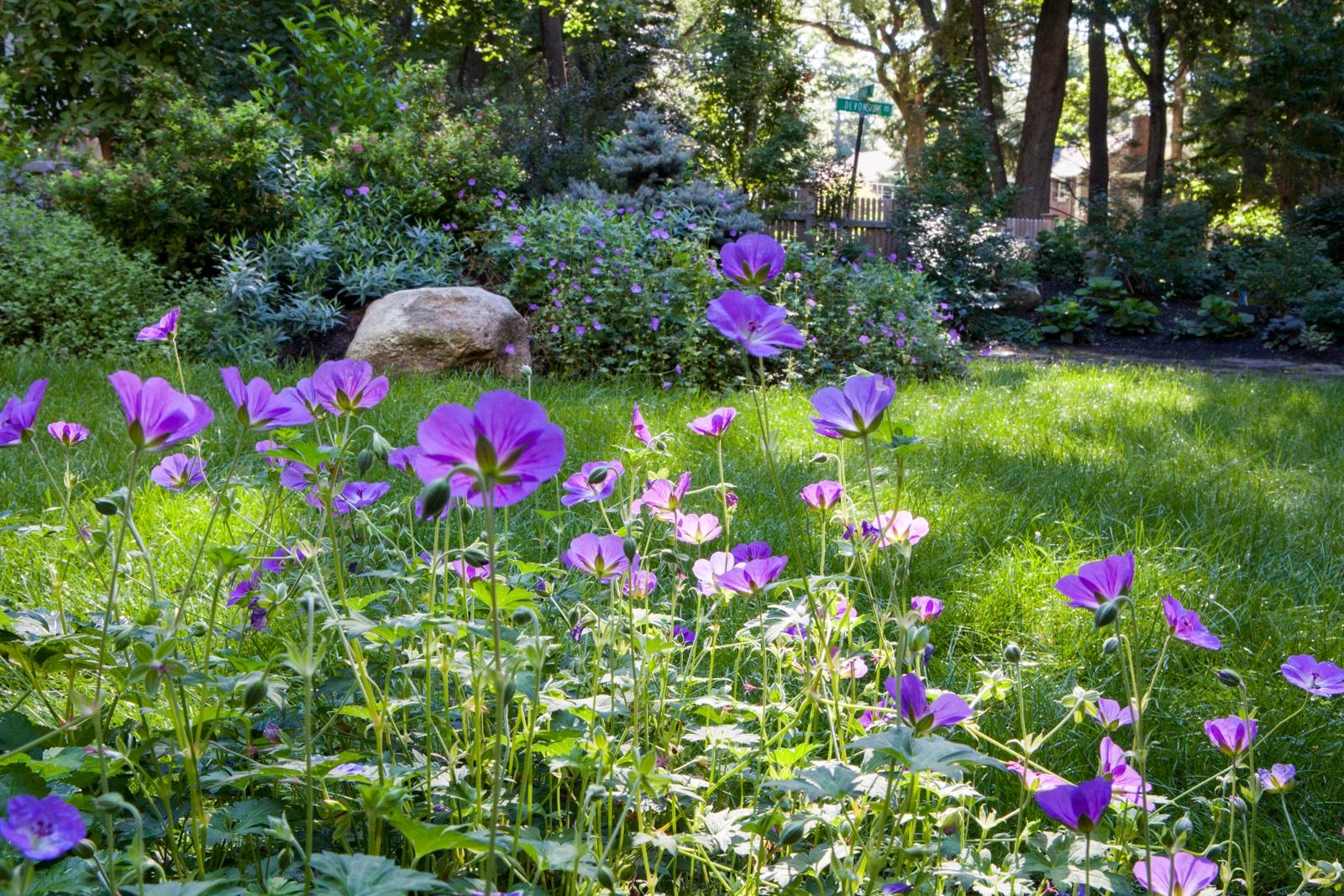flower garden for pollinators