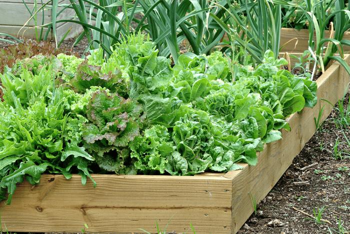 Vegetable-container-garden