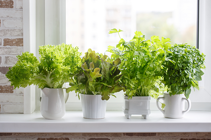 herb-container-garden