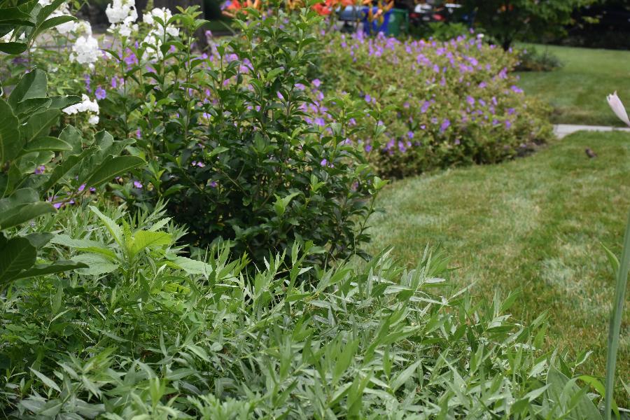 organic-gardening-1-1