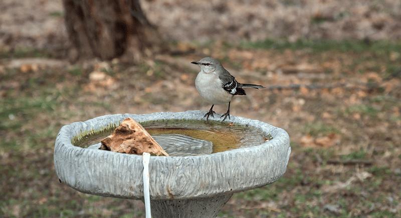robin-on-heated-birdbath