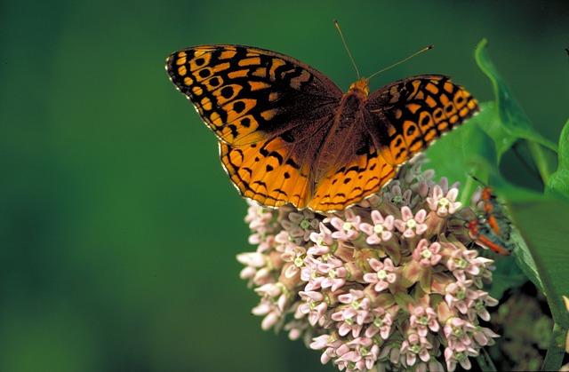 butterfly-752456_640
