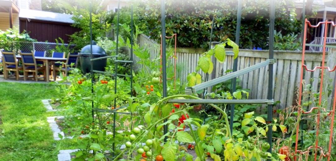 moodscapes-ecological-yard-evaluation