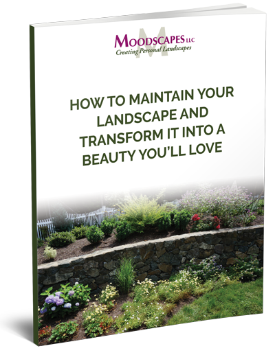 maintain-and-transform-cover