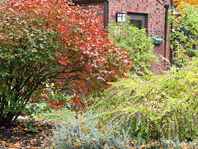 fall-landscape-shrubs