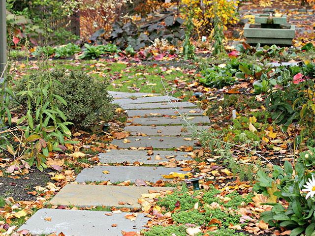 fall-landscape-walkway