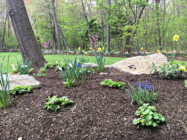 backyard-woodland-garden-with-plantings
