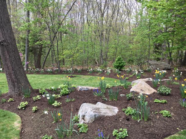 plantings-on-edge-of-woods
