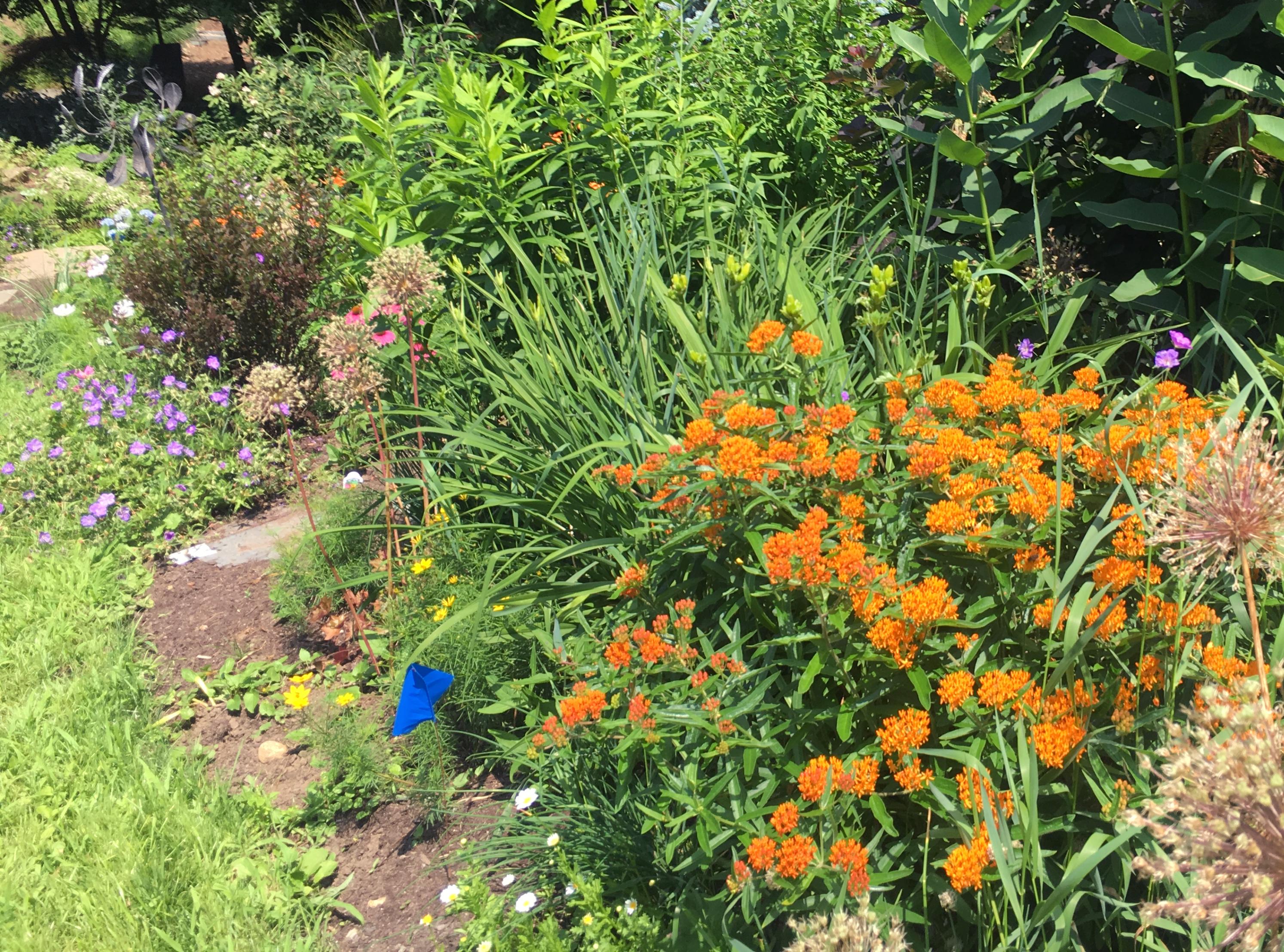 pollinator_garden_newsletter-1