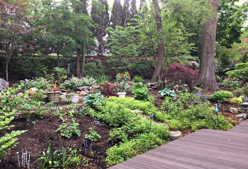 landscaping bloom time massachusetts