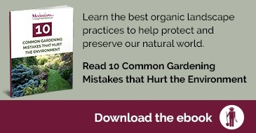 10 Common Gardening Mistakes that Hurt the Environment