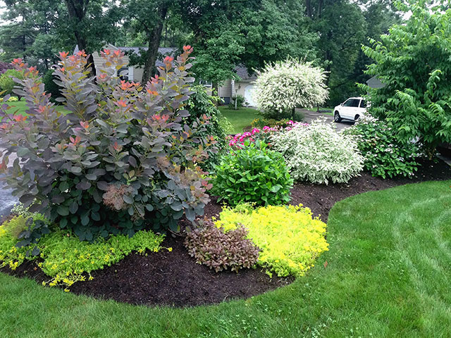 multiple-colored-front-yard.jpg