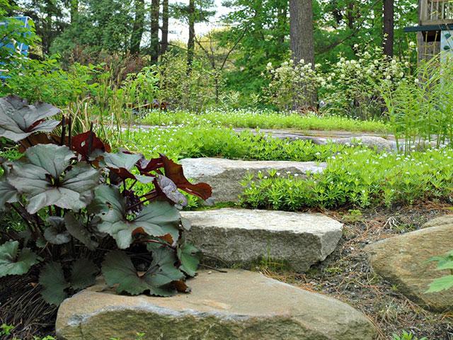 woodland-walkway-steps.jpg